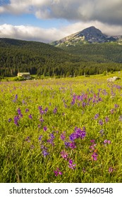 flowers blooming on a mountain meadow