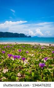 Flowers blooming on scenic Krabi beach, Thailand