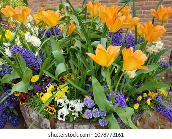 Flowers blooming in Spring