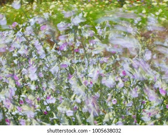 Flowers blowing in the  wind in summer.