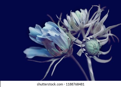 flowers with blue buds, bouquet on a black background.