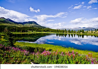 Flowers and blue skies at Little Molas Lake in the San Juan Mountains of Colorado.