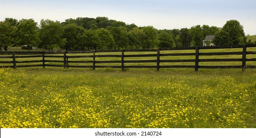 flowers border a fence