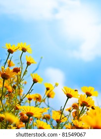 Flowers border, field of fresh yellow daisies over blue sky natural background
