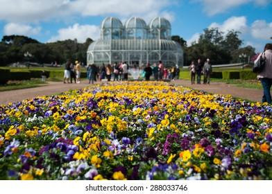 Flowers in Botanical Garden in Curitiba, in Brazil.