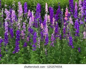 Flowers in Botanical Garden of Sydney, Australia
