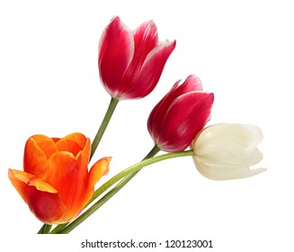 Flowers bouquet. Variegated tulips on a white background
