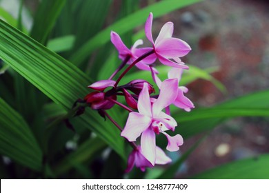 Flowers are breeding structures for flowering plants. The function of interest is to produce seeds through breeding and also to be an intermediary for the union of male gametes and female gametes. Flo