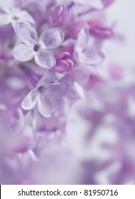 Flowers and buds of lilac with selective focus