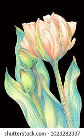 Flowers and buds of tulips - drawing with colored pencils. Abstract wallpaper with floral motifs.  Wallpaper.