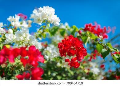 flowers of bush