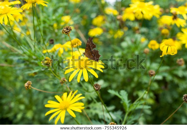 Flowers and butterflies There is a butterfly on a yellow flower. And it is eating the flower honey.