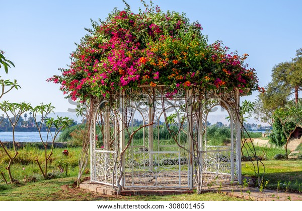 flowers by the nile , explosion of colors 3