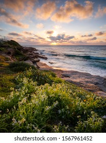 Flowers by the sea Magical sunrise over the ocean, Bronte Beach, Sydney Australia