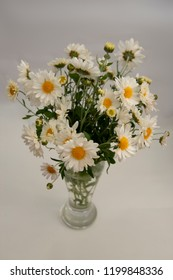 FLOWERS - Camomiles in a glass vase