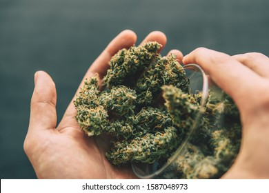 Flowers of cannabis marijuana weed lie on a dark background top view Cones of cannabis