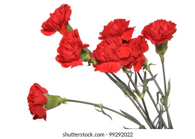 Flowers of a carnation are collected in a bouquet