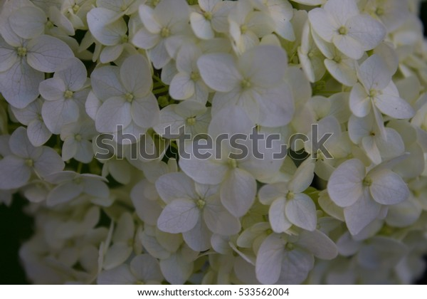 Flowers carpet background.