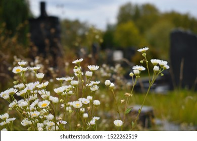 Flowers in the cemetery. Wildflowers on the graves. Orthodox Russian cemetery in the summer. Old burial places and gravestones.