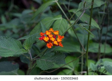 flowers of cerro el avila in caracas venezuela