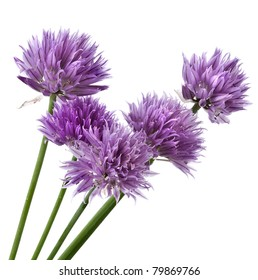 Flowers of Chives  isolated on white background