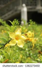 Flowers in Church garden at  Mahé Island, Seychelles.
