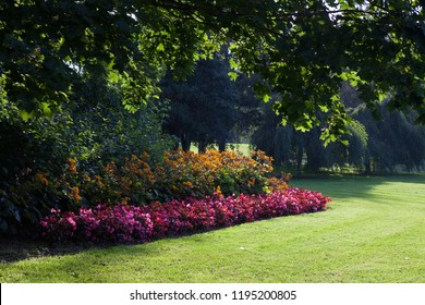 Flowers in city park landscape