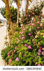 Flowers at city street. Nature in ubran town.