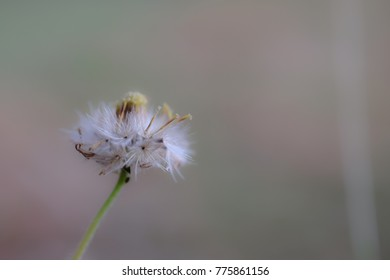 Flowers close up isolated on background