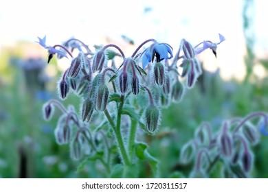 Blumen als Nahaufnahme in einem Blumenfeld.