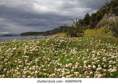 Flowers and coast in Patagonia, Chile