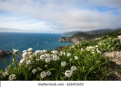 Flowers at the coastline / Highway One California