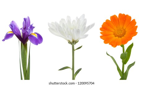 Flowers collection yellow iris, chrysanthemum and calendula on isolated