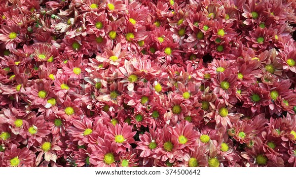 Flowers Color Valentine Background Wallpaper Nature Stock