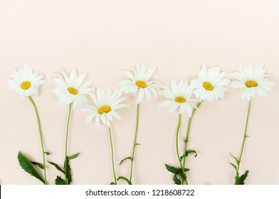Flowers composition background. bouquet of flowers camomiles on pale beige background. Flowers frame. Valentine's day, women's day concept.Top view. Copy space