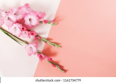 Flowers composition background.Bouquet of beautiful pink gladioluses on pale pink pastel colors paper geometric background. Pattern of gladioli,  holiday greeting card. Flat lay, Top view. Copy space