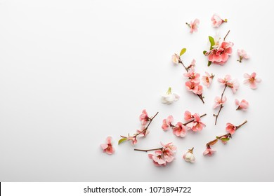 Flowers composition. Frame made of branches of Japanese quince on white background. Flat lay, top view, copy space