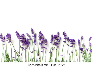 Flowers composition. Frame made of fresh lavender flowers on white  background. Lavender, floral background. Flat lay, top view, copy space, square