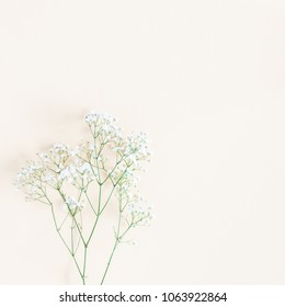 Flowers composition. Gypsophila flowers on yellow background. Flat lay, top view, copy space, square