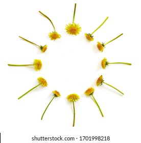 Flowers composition. Pattern made of yellow dandelions with leaves on white isolated background. Flat lay, top view, copy space concept.