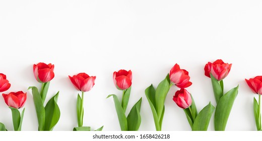 Flowers composition romantic. Red tulips on white background. Wedding. Birthday. Happy womens day. Mothers Day. Valentine's Day. Flat lay, top view, copy space, banner