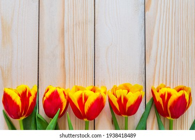 Flowers composition. Springtime red tulip flowers on wooden background with copy space. Hello Spring. Flat lay, top view. Holiday Greeting Card for Womens Day and Mothers Day.