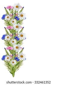 Flowers cornflowers isolated on white background