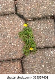 Flowers in cracks