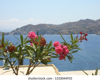 Flowers in Crete Greece