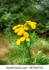 Flowers in Czech Republic.