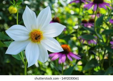 Jolly Bee Images, Stock Photos & Vectors | Shutterstock