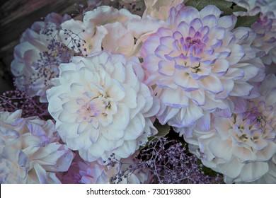 flowers dahlias, light purple tint. background