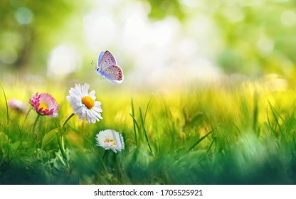 Flowers daisies in grass and butterfly in meadow in nature in rays of sunlight in summer or spring close-up macro. Picturesque colorful artistic image with a soft focus. - Shutterstock ID 1705525921