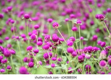 flower's dance